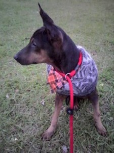 Baker, wearing a warm and wooly winter hat as sweater, and a becoming orange bandana.